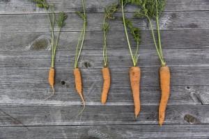 vegetables-1666632_1280